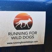 running for wild dogs 2017 59